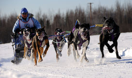 Limited North American Sled Dog Race Royalty Free Stock Images