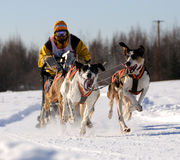 Limited North American Sled Dog Race Royalty Free Stock Image