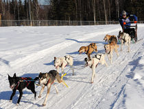Limited North American Sled Dog Race - Alaska Stock Image