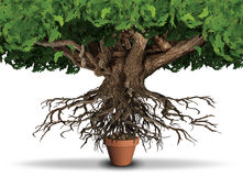 Limited Resources. Business and economy concept as huge tree and roots trying to get nutrients from a small plant pot as a scarcity metaphor with 3D Royalty Free Stock Images