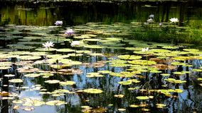 Limmen National Park, Nothern Territory, Australia stock photos