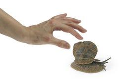 Limo del caracol - el producto para el cuidado de la piel último y más caliente Imagen de archivo