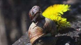 Limo del caracol en el otro caracol metrajes