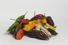 Limochilistilleben - uppsättningen av olika färger på samma planterar Royaltyfri Foto
