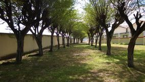 Limoeiro-PE di polo UAB - poco legno Immagine Stock