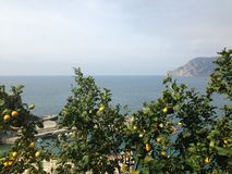 Limon Horizont. Cinque Terre view on the sea royalty free stock photo