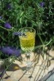 Limoncello italiano tradicional da bebida do alcoho fotos de stock royalty free