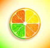 Limone, arancio, limetta e pompelmo Immagini Stock