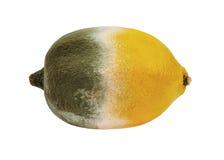 Limone con la muffa Immagini Stock Libere da Diritti