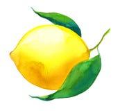Limone dell'acquerello Fotografia Stock Libera da Diritti