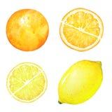Limone disegnato a mano dell'acquerello e frutti arancio immagine stock