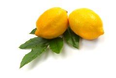 Limone due Fotografia Stock