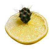Limone e cactus spinoso isolati su fondo bianco, concetto di gusto di una combinazione di elementi della pianta immagini stock libere da diritti