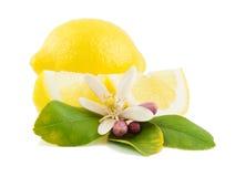 Limone e fiore Immagine Stock