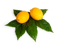 Limone giallo con il foglio verde. Immagini Stock Libere da Diritti