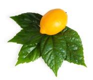 Limone giallo con il foglio verde Fotografia Stock