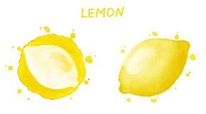 Limone Illustrazione dell'acquerello Immagini Stock