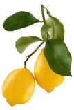 Limone isolato Limone fresco di tutto due isolato sul backgrou bianco Fotografie Stock