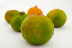 Limone, mandarini ed arance Immagini Stock