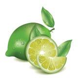 Limone realistico Illustrazione Vettoriale