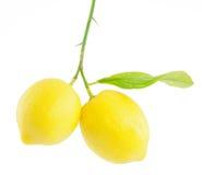 Limone su una filiale con il foglio Immagini Stock Libere da Diritti