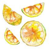 Limone succoso dipinto a mano dell'acquerello isolato su fondo bianco illustrazione di stock