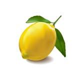 Limone sui precedenti bianchi Fotografia Stock Libera da Diritti