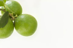 Limone - verde di fundo di em di Limão Fotografie Stock Libere da Diritti