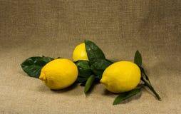 Limones con las hojas Imagenes de archivo