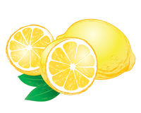 Limones del vector con las hojas Fotografía de archivo libre de regalías