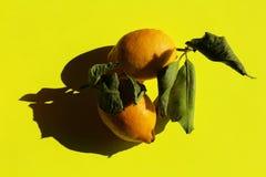 Limones en el fondo amarillo, aún vida Fotos de archivo libres de regalías