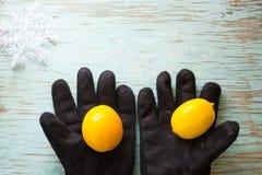 Limones en guantes negros del invierno Fotografía de archivo