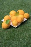 Limones en la hierba - retrato Imagen de archivo