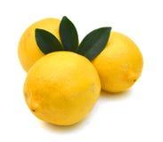 Limones en un fondo blanco del estudio Imagen de archivo