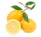 Limones frescos Fotografía de archivo