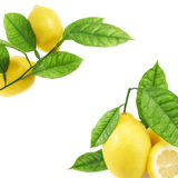 Limones sobre el fondo blanco Foto de archivo libre de regalías