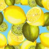 Limones y cales dibujados mano Imagenes de archivo