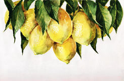 Limoni royalty illustrazione gratis