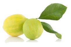Limoni. Immagini Stock Libere da Diritti
