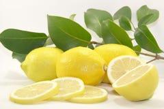 Limoni con i fogli Immagini Stock Libere da Diritti