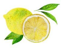Limoni con i fogli Immagine Stock