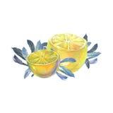 Limoni con i fogli Fotografie Stock