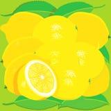 Limoni con i fogli Immagini Stock