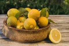 Limoni di maturazione Immagini Stock