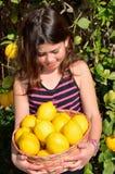 Limoni di raccolto fotografia stock libera da diritti