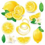 Limoni differenti con le foglie ed i fiori Fotografia Stock Libera da Diritti