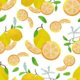 Limoni e fiori senza cuciture del modello illustrazione di stock