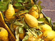 Limoni freschi Fotografie Stock Libere da Diritti