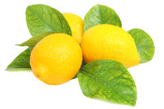Limoni freschi Fotografie Stock