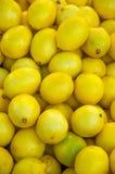 Limoni freschi Immagine Stock